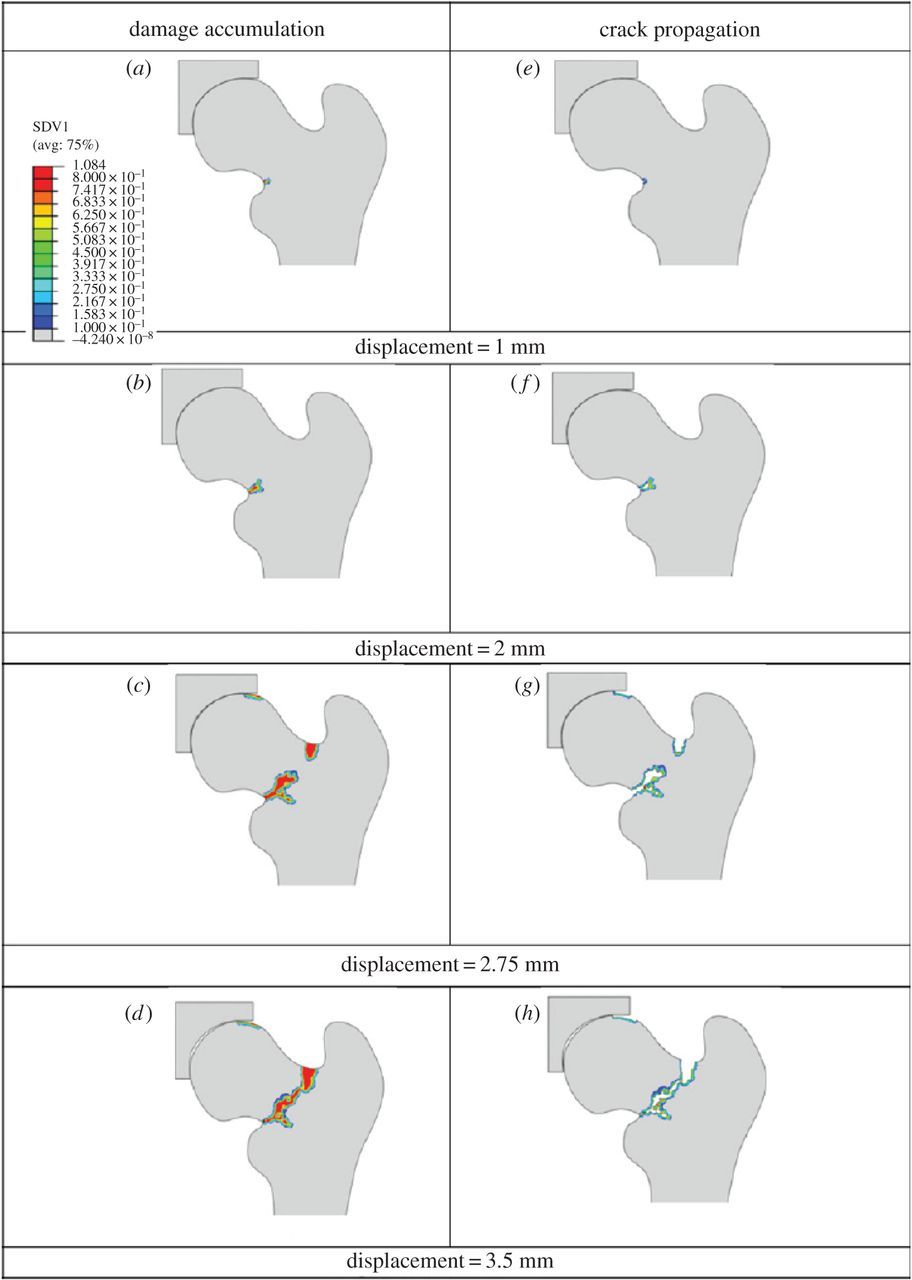 Modelling of bone fracture and strength at different length