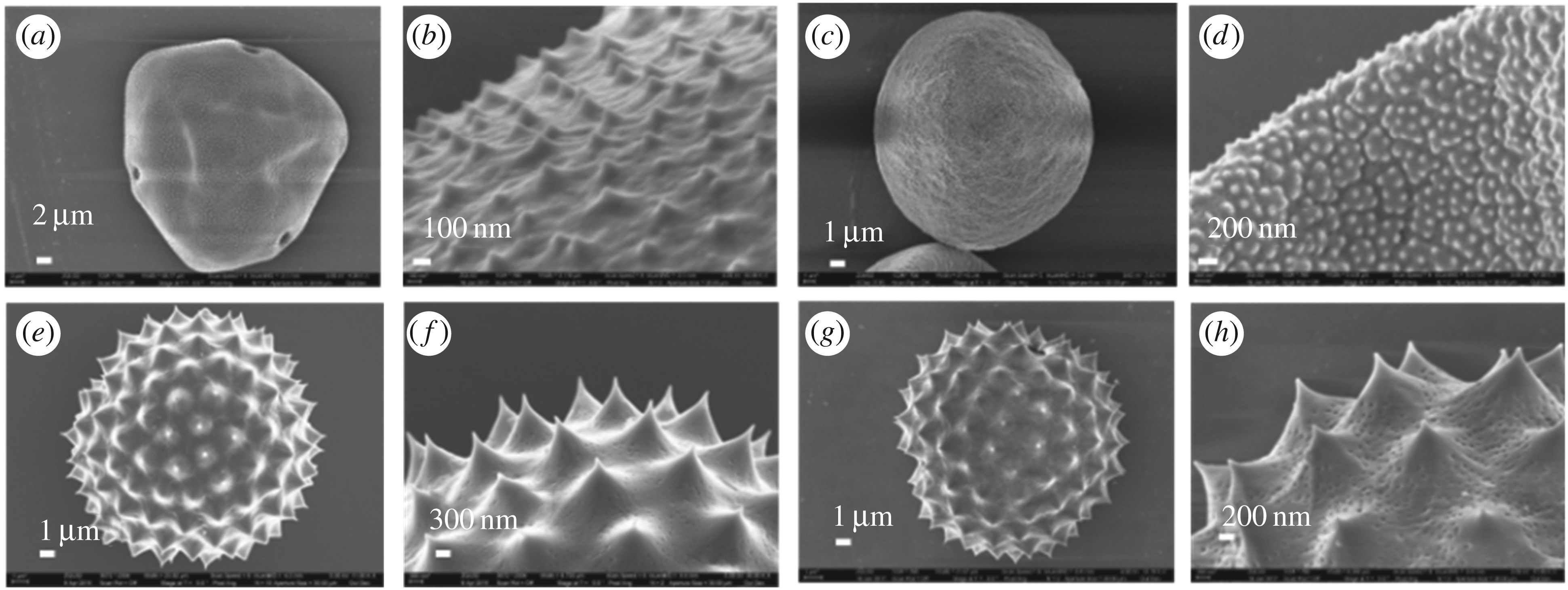 The atypically high modulus of pollen exine | Journal of The