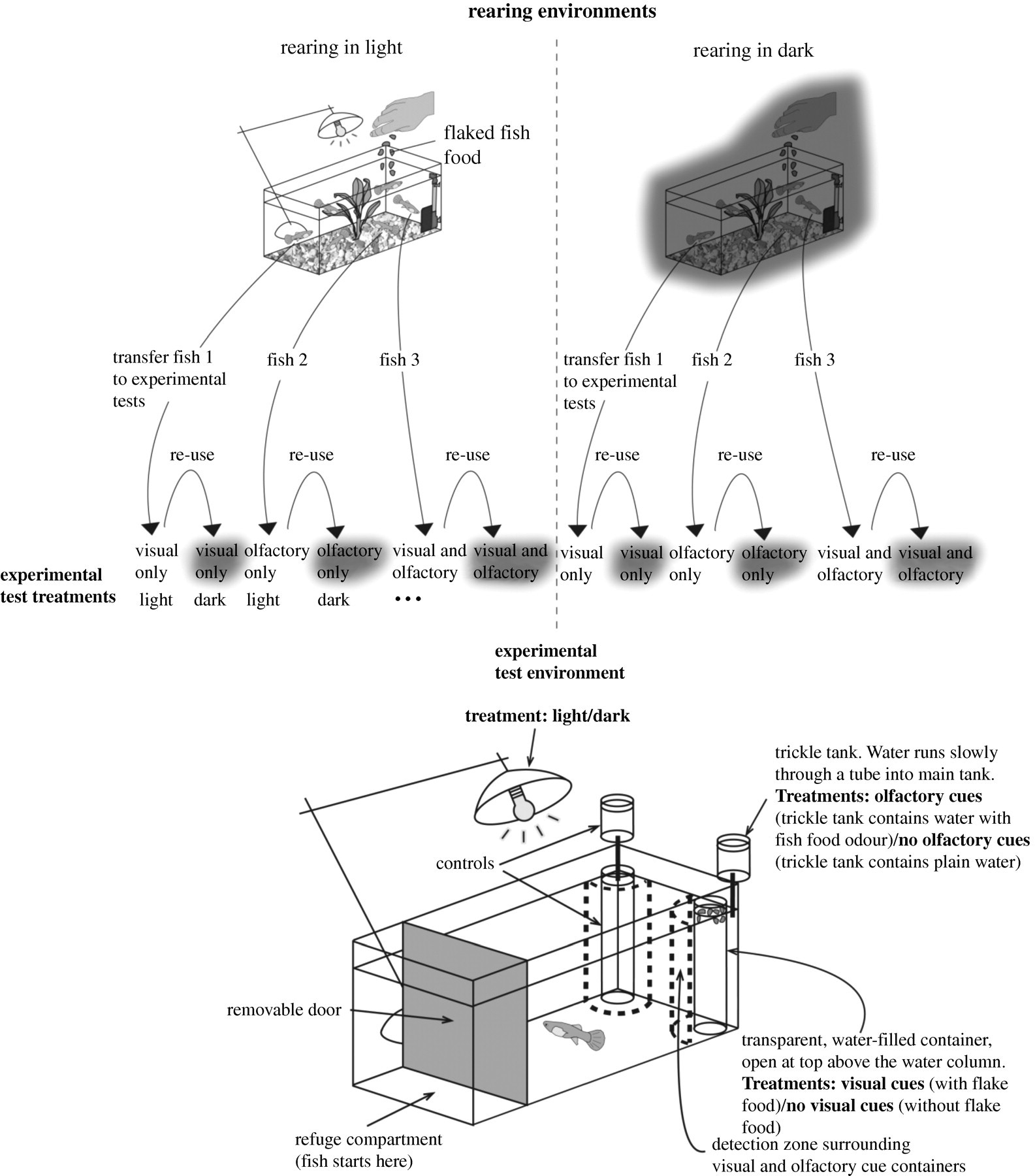 behavioural consequences of sensory plasticity in guppies High School Football Field Diagram Printable download figure