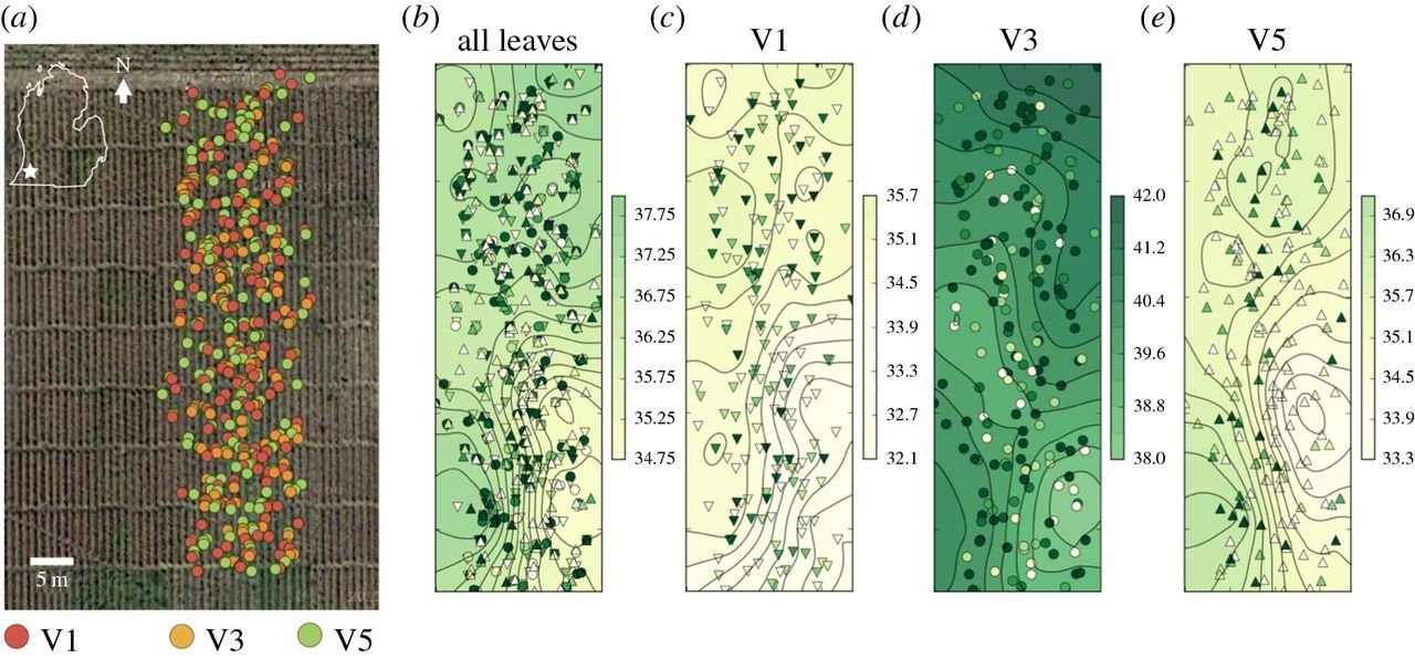MultispeQ Beta: a tool for large-scale plant phenotyping