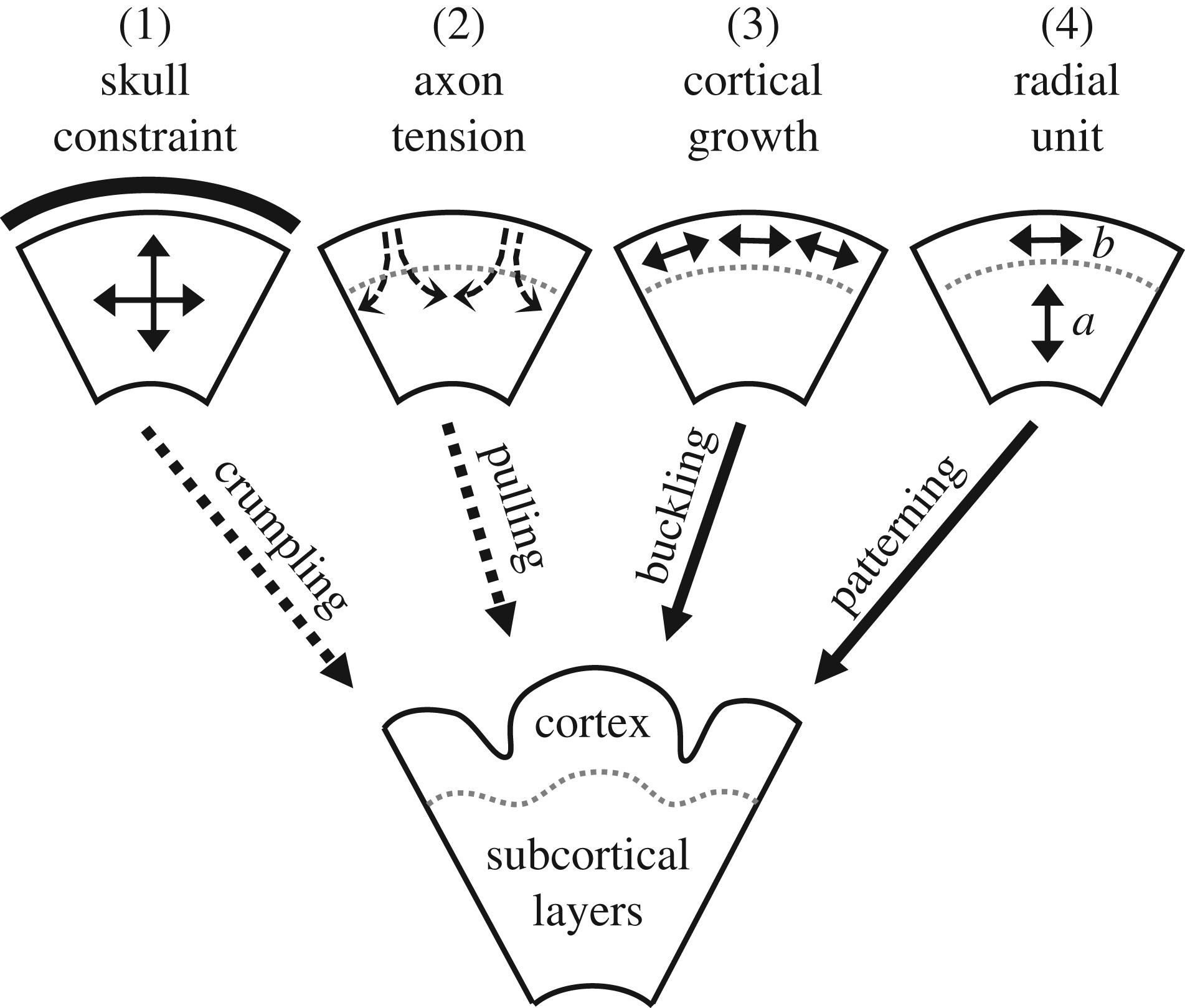 Mechanics of cortical folding: stress, growth and stability
