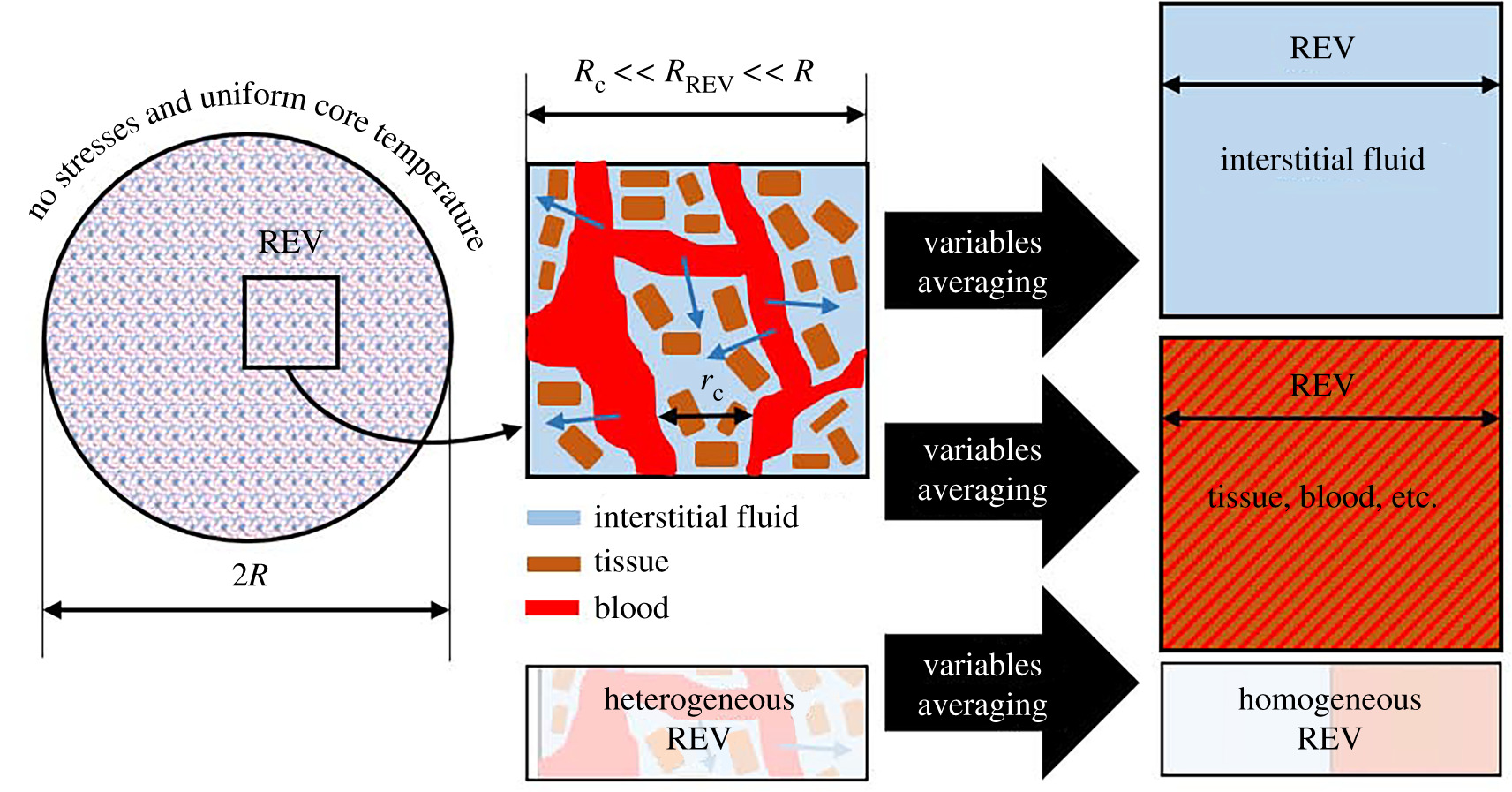 A thermoporoelastic model for fluid transport in tumour tissues