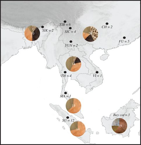 Two species of Southeast Asian cats in the genus Catopuma