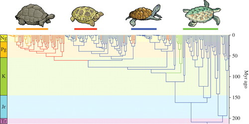 The evolution of island gigantism and body size variation in