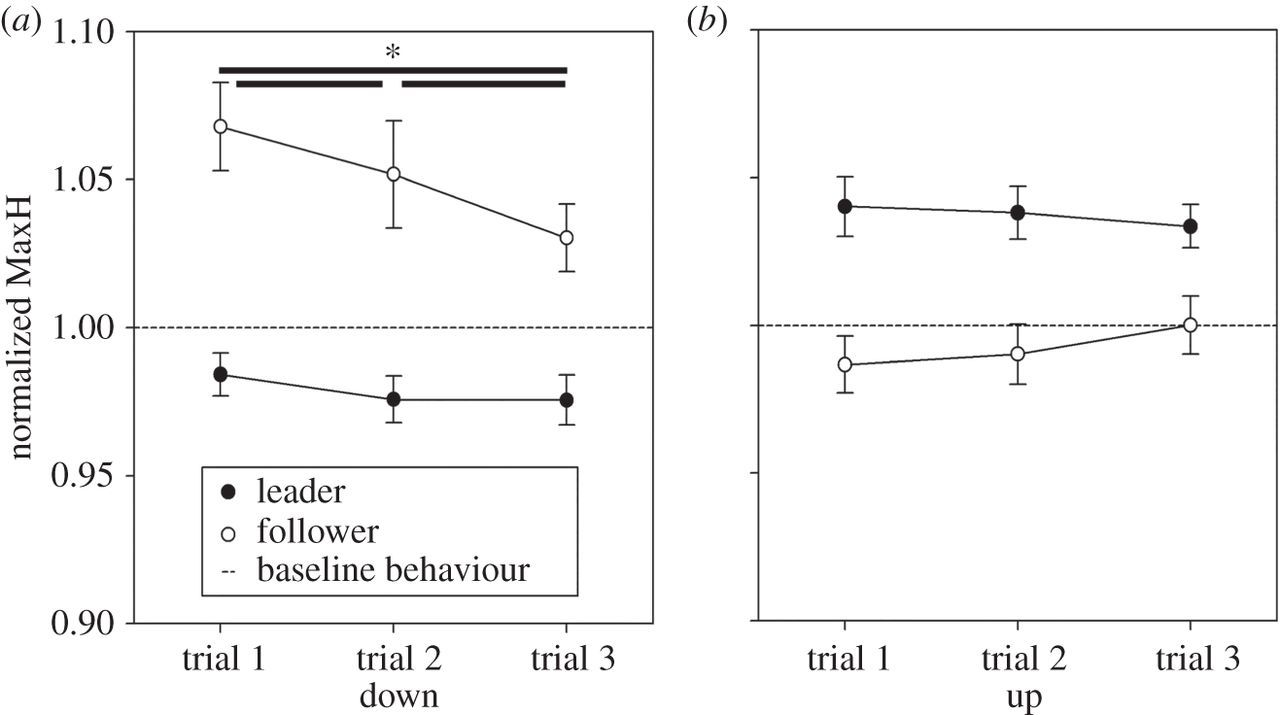 Interactional leader–follower sensorimotor communication