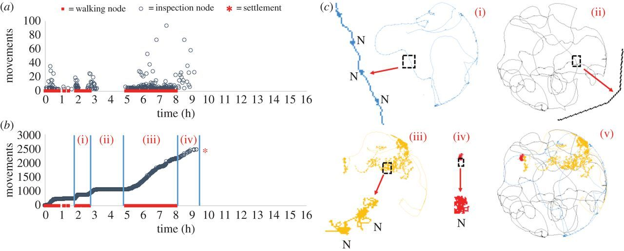 Quantitative analysis of the complete larval settlement process ...
