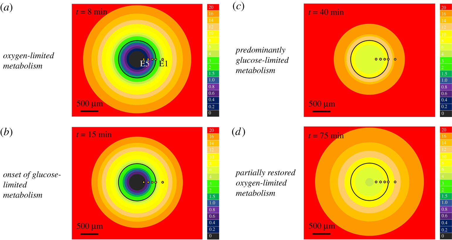 Electrochemical mapping of oxygenation in the three-dimensional