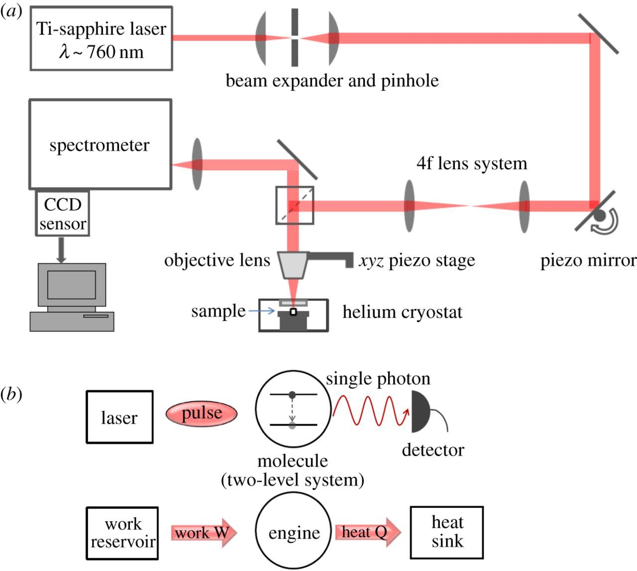 Organic molecule fluorescence as an experimental test-bed for