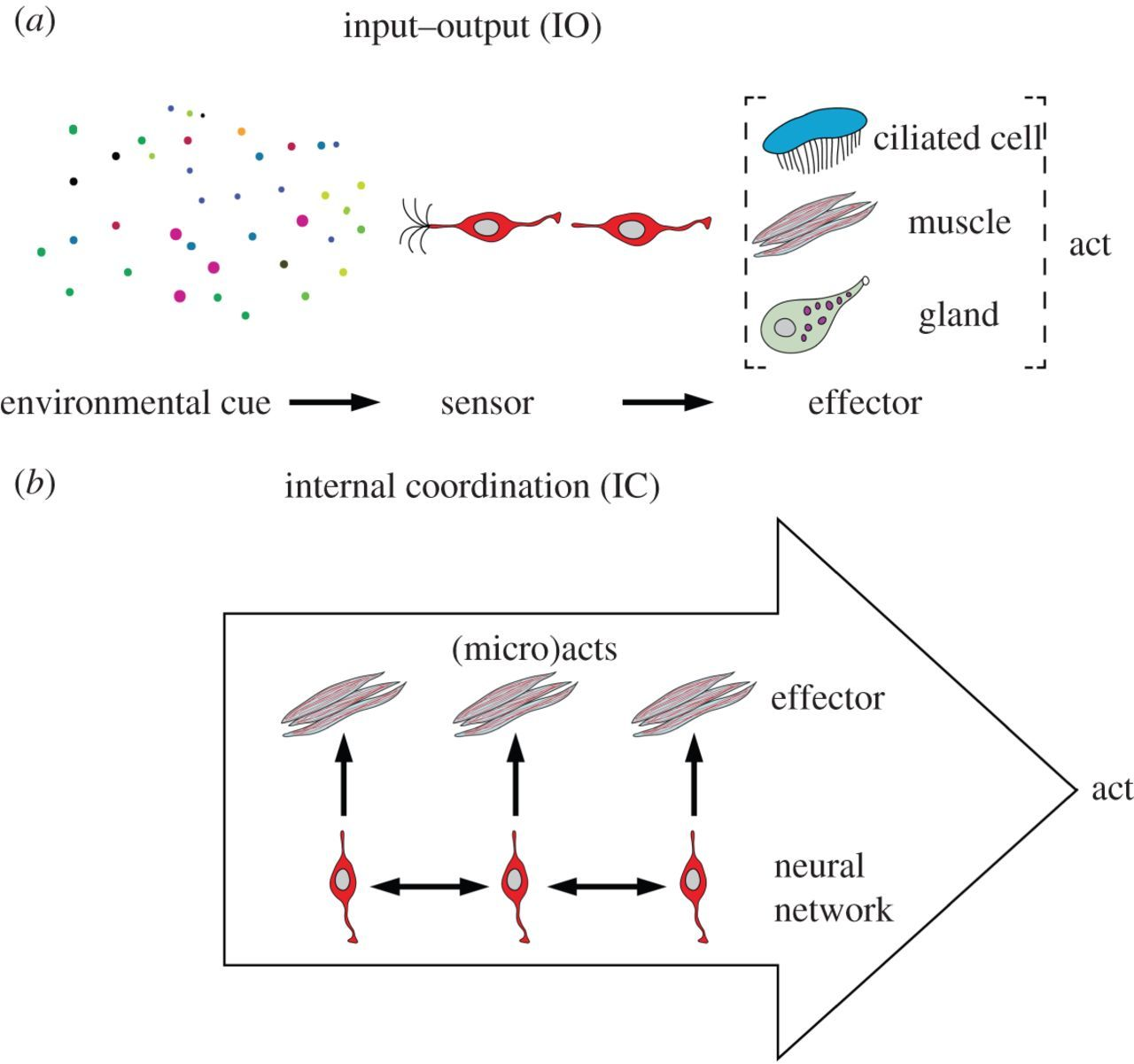 An option space for early neural evolution | Philosophical