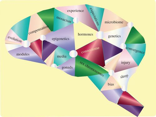 Multifaceted origins of sex differences in the brain