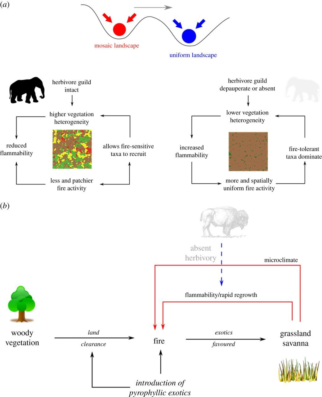 Pyrodiversity is the coupling of biodiversity and fire regimes in