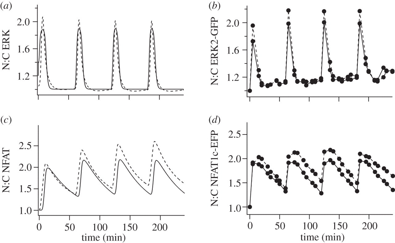 Decoding GnRH neurohormone pulse frequency by convergent