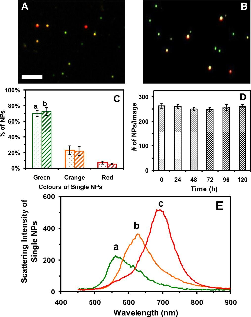 Real-time in vivo imaging of size-dependent transport and toxicity