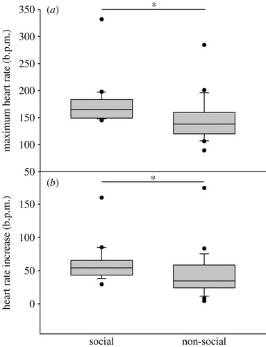 Heart rate modulation in bystanding geese watching social