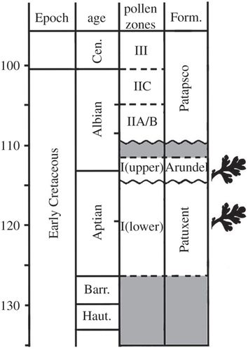 Fossil evidence for a herbaceous diversification of early