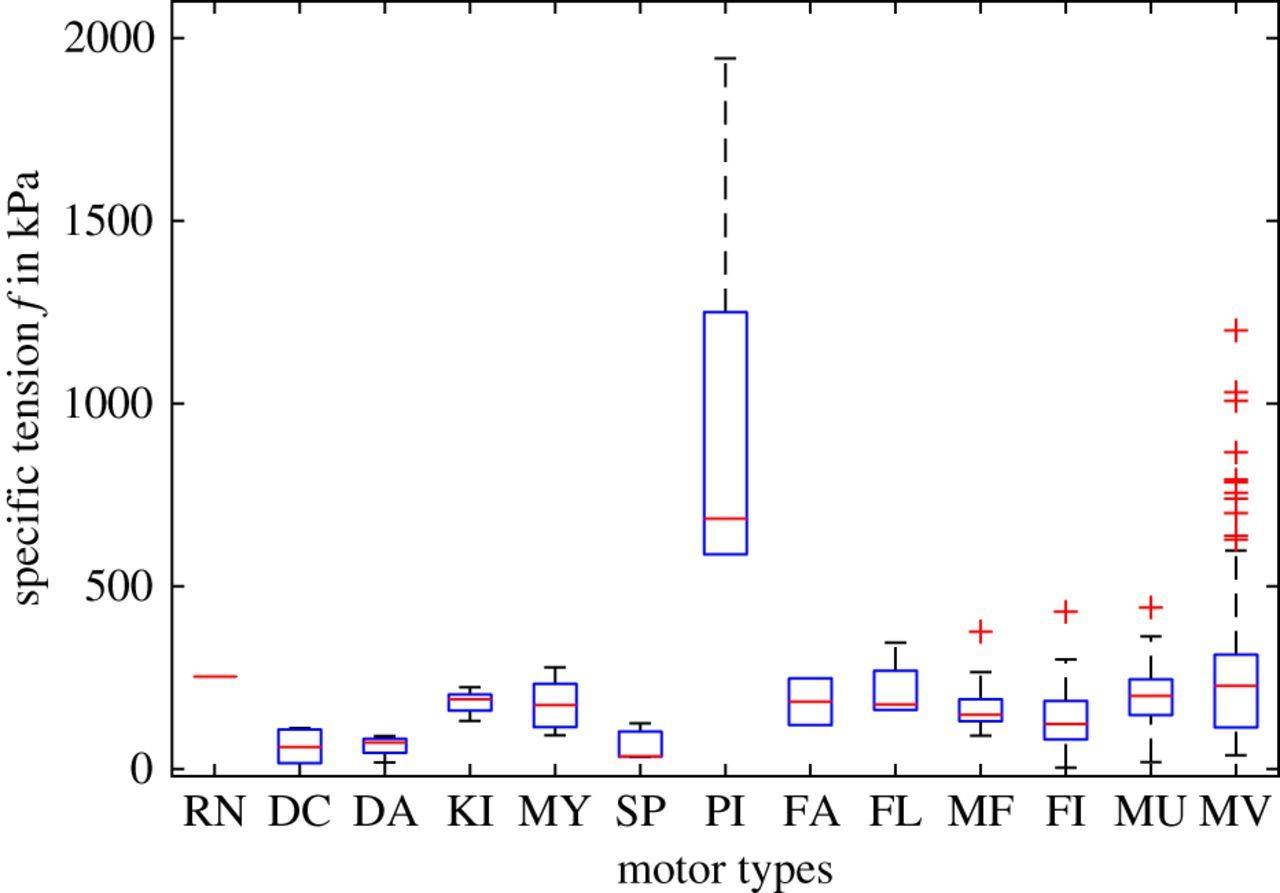 Force per cross-sectional area from molecules to muscles: a