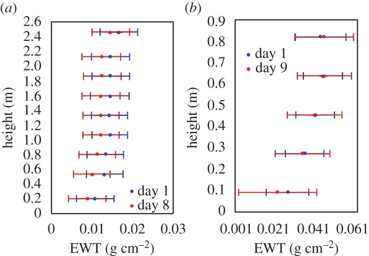 Estimation of vegetation water content at leaf and canopy level