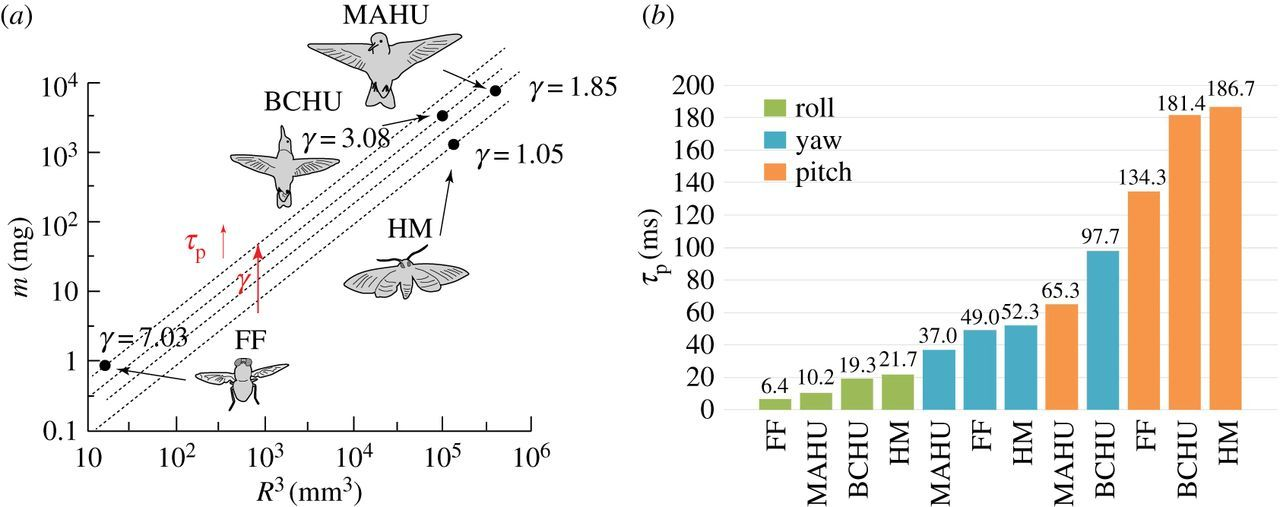 Limitations of rotational manoeuvrability in insects and