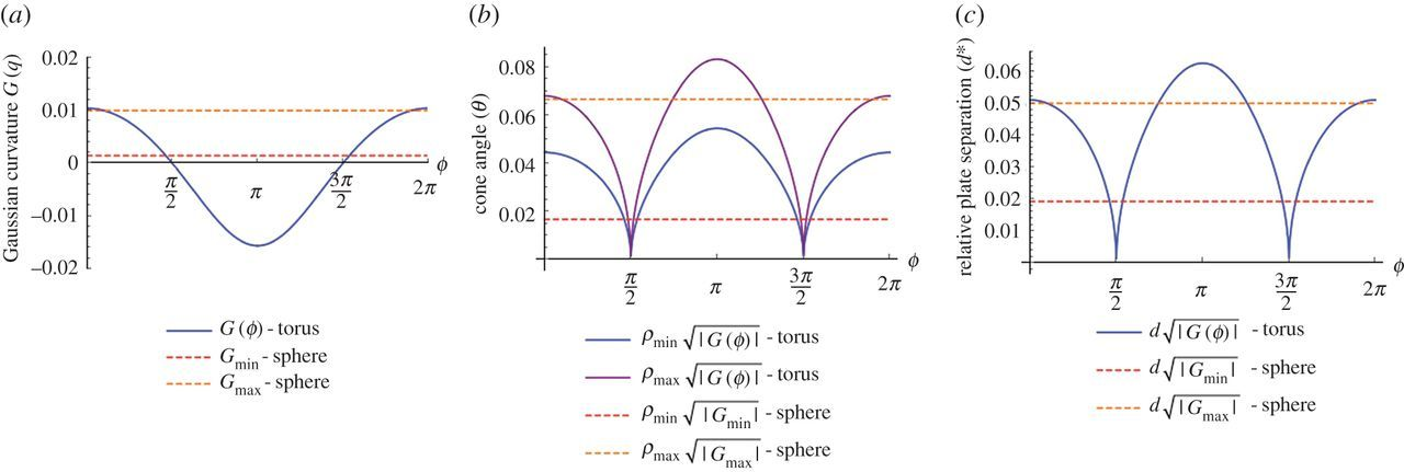 Curvature driven motion of a bubble in a toroidal Hele-Shaw cell