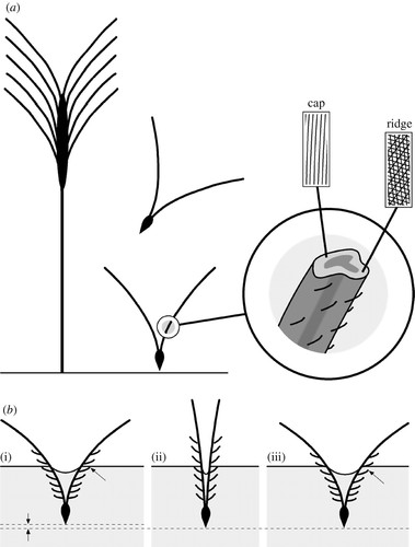 Actuation Systems In Plants As Prototypes For Bioinspired Devices