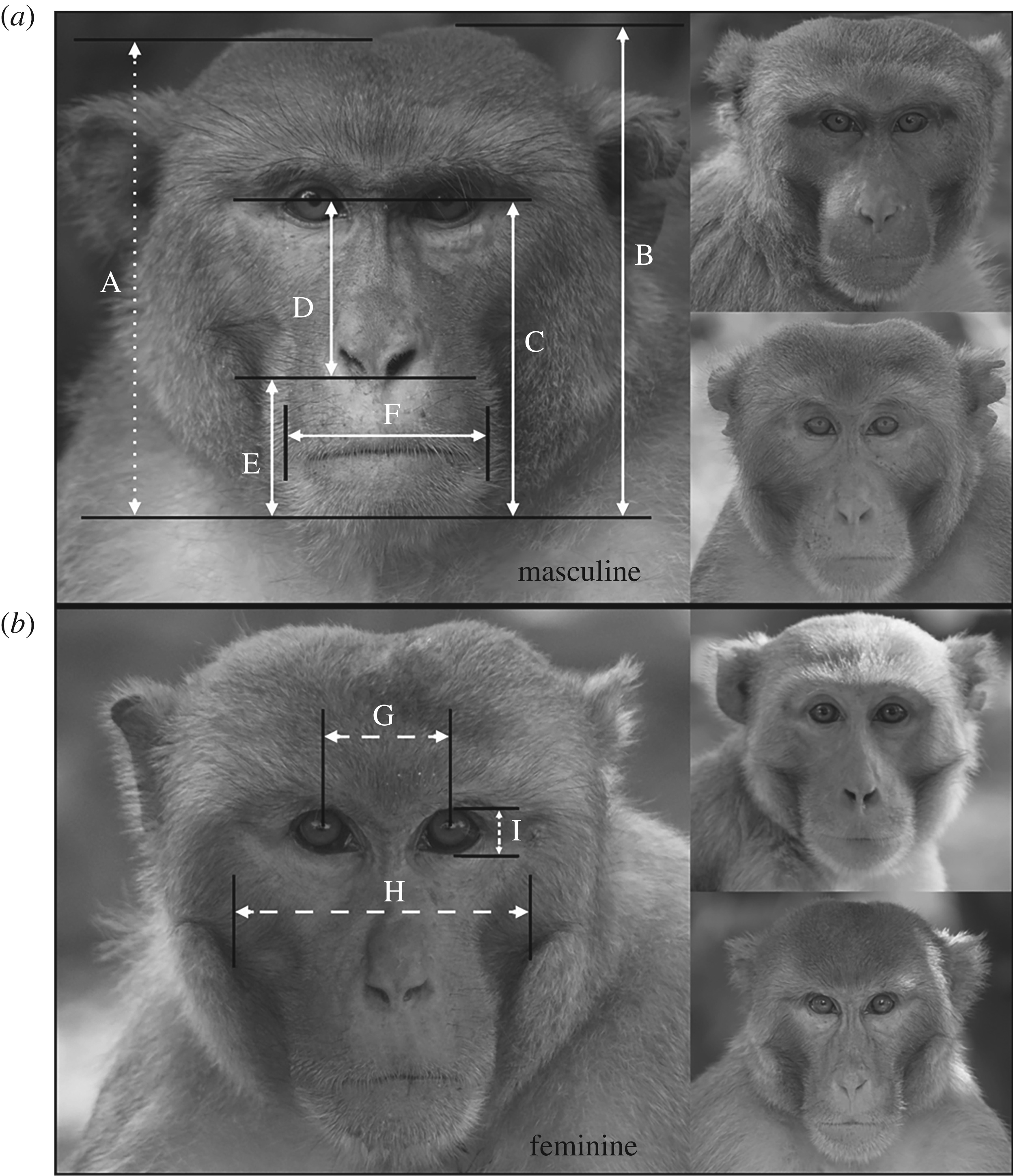 Experimental evidence that female rhesus macaques (Macaca