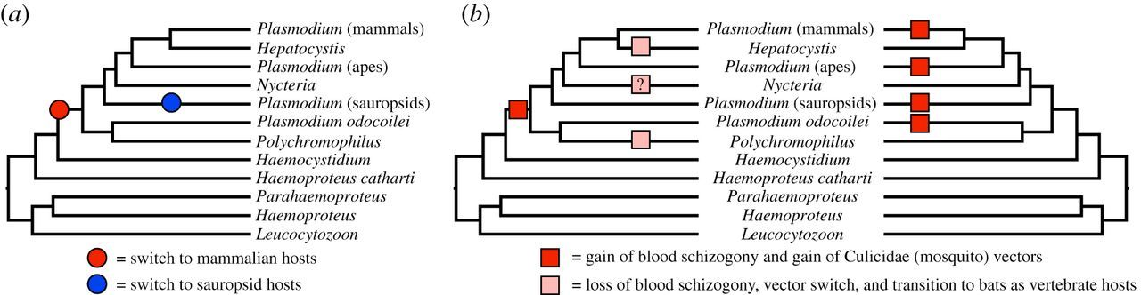 The polyphyly of Plasmodium: comprehensive phylogenetic