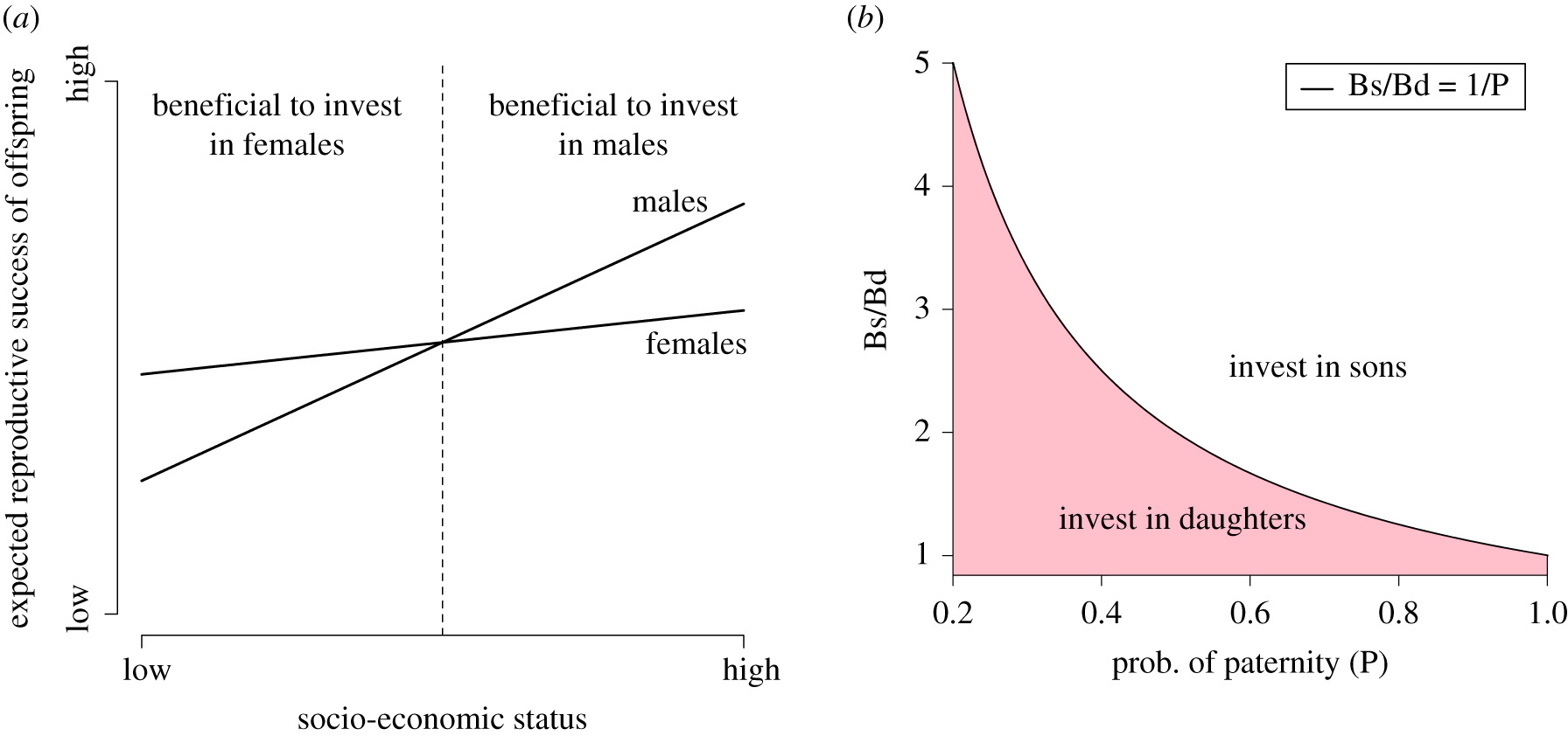 The expendable male hypothesis | Philosophical Transactions