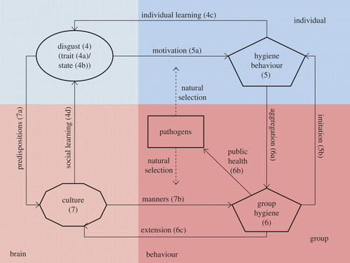 Disgust As An Adaptive System For Disease Avoidance