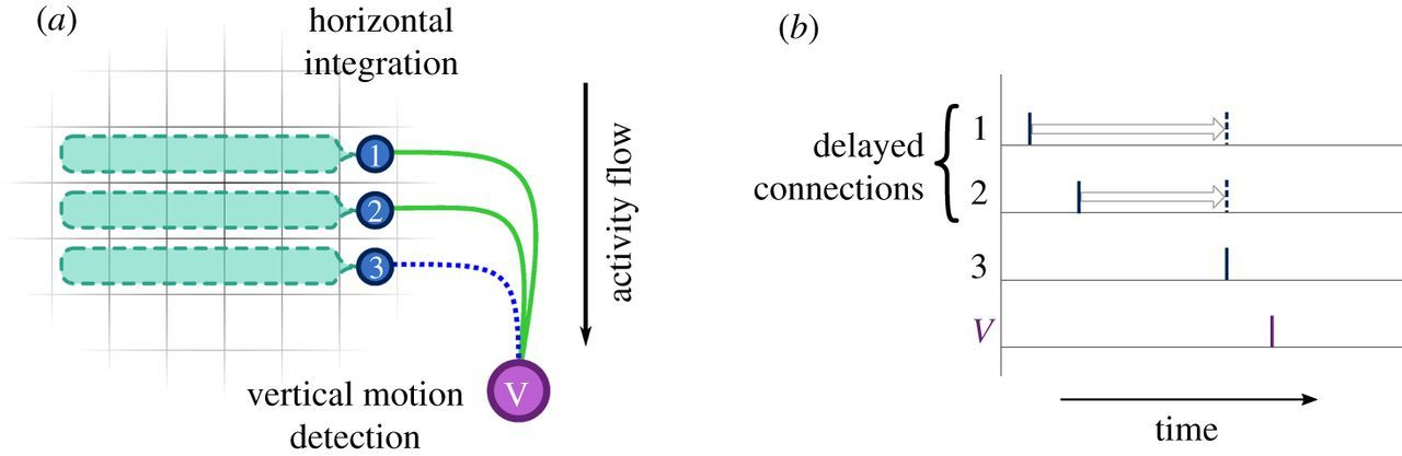 Spiking neural networks for computer vision   Interface Focus