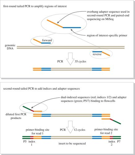 MiFish, a set of universal PCR primers for metabarcoding