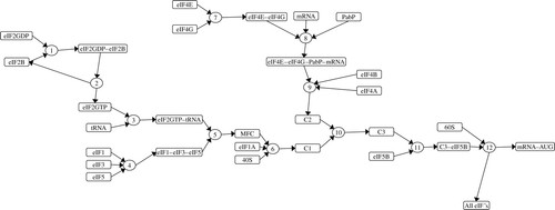 Control of translation initiation: a model-based analysis