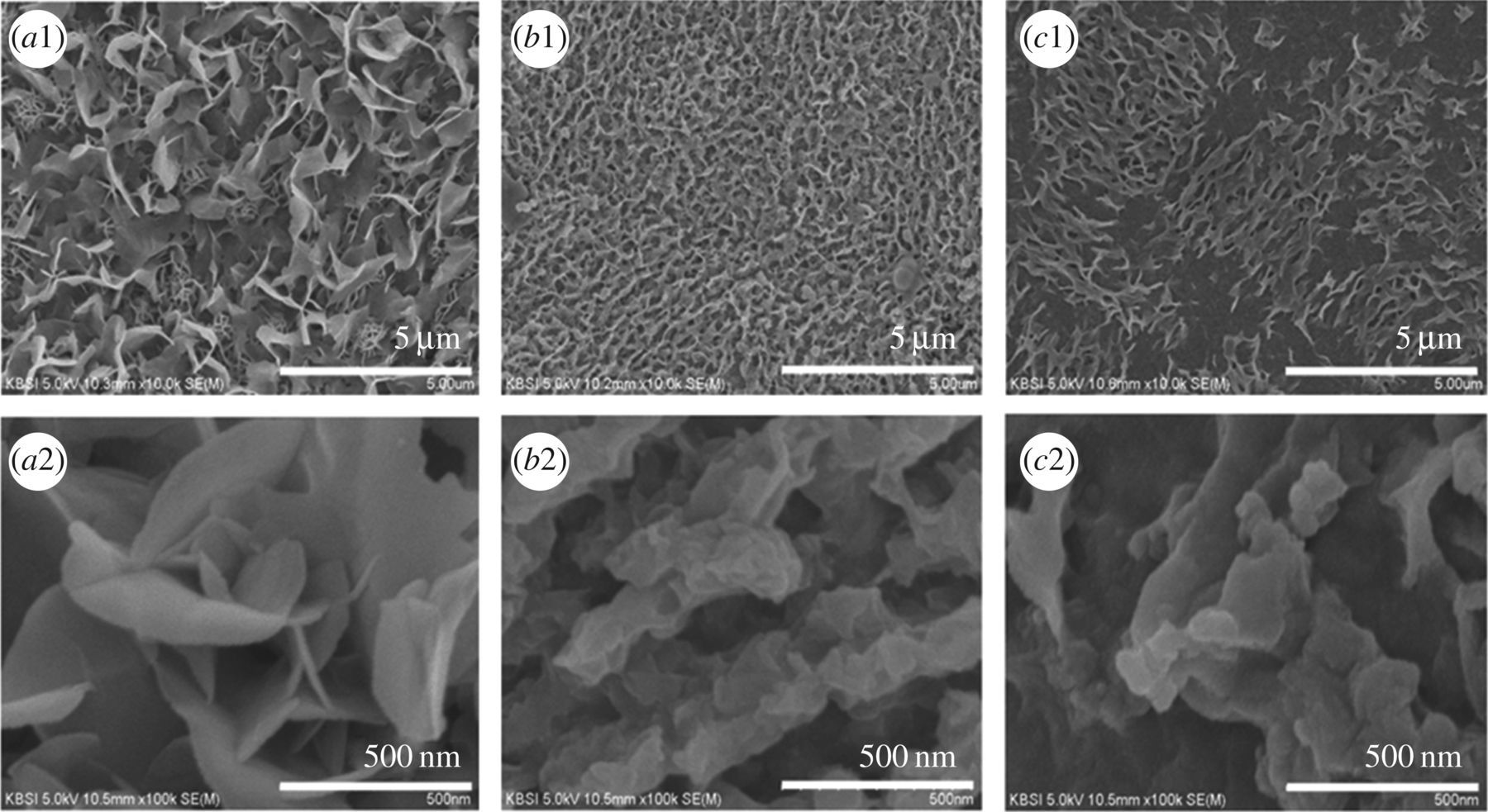 Influence of solvents in the preparation of cobalt sulfide for