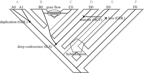 Multilocus Inference Of Species Trees And Dna Barcoding