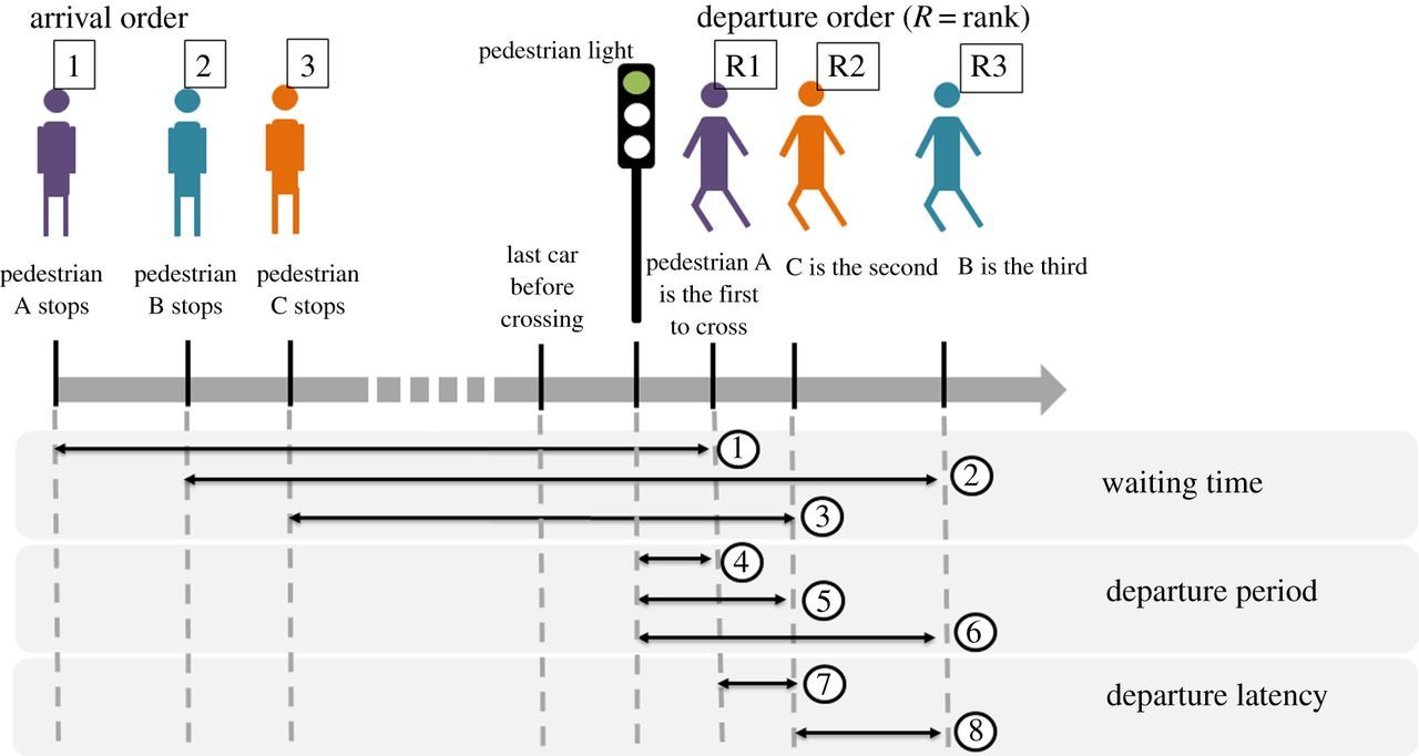 Cultural influence of social information use in pedestrian