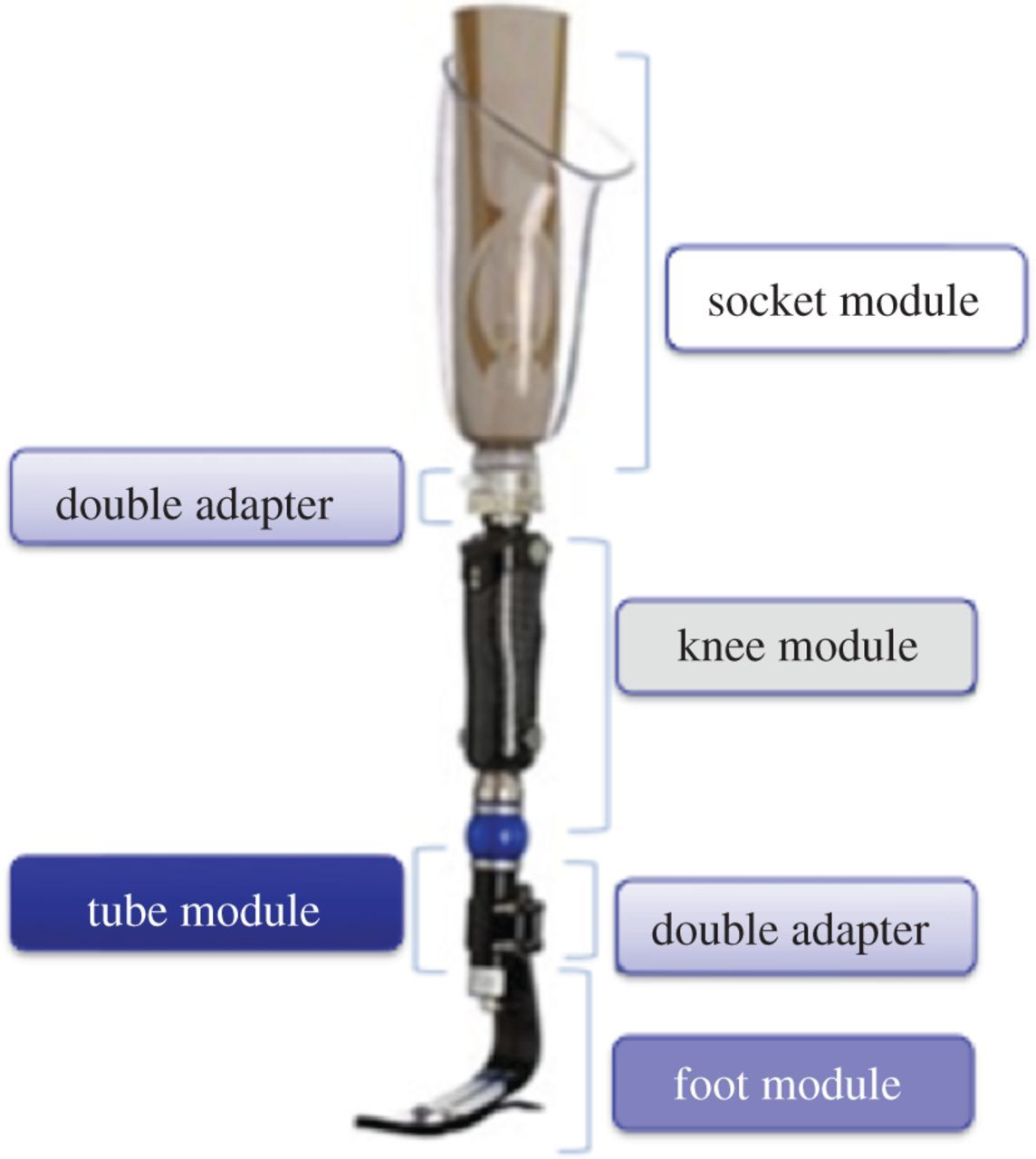 A digital patient for computer-aided prosthesis design | Interface Focus