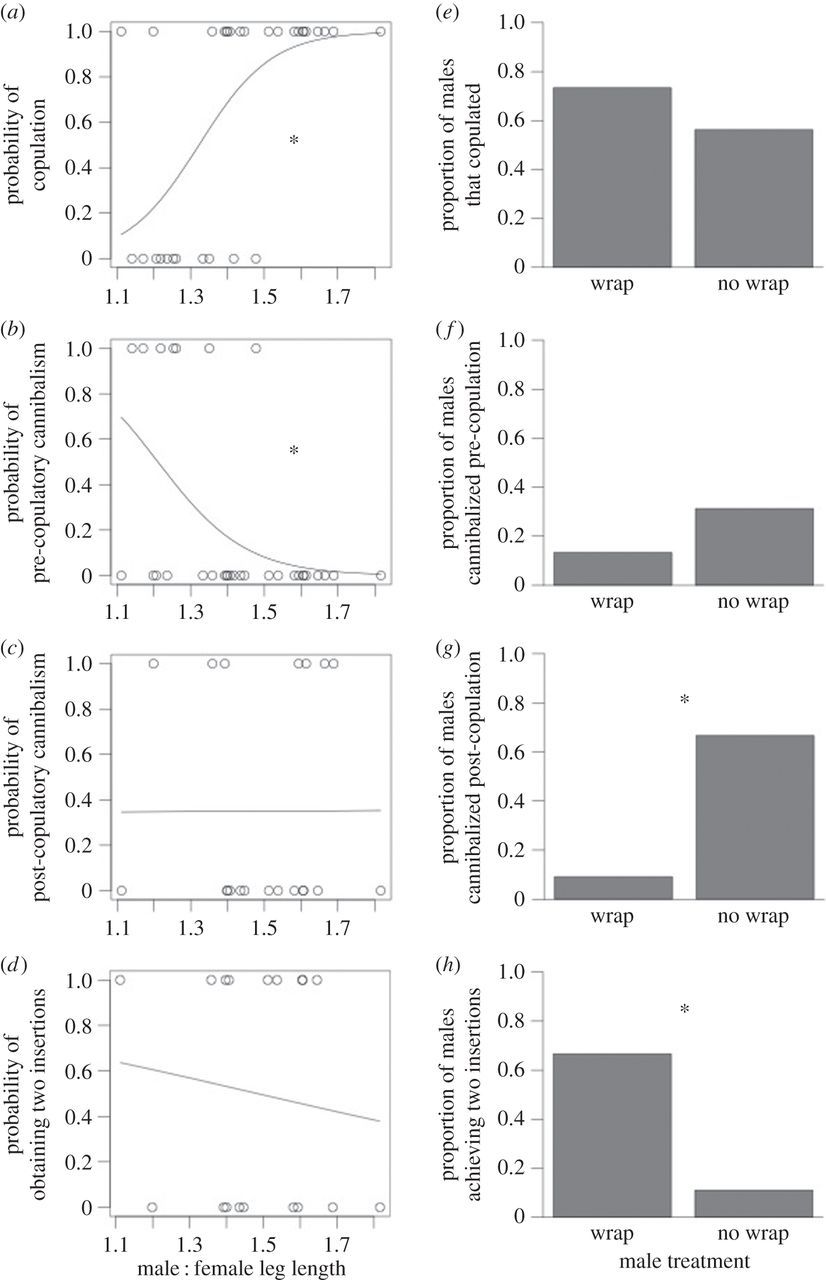 Benefits of size dimorphism and copulatory silk wrapping in the
