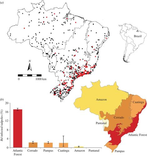 Historical amphibian declines and extinctions in Brazil
