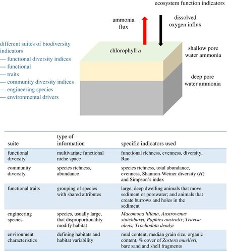 Changes in the location of biodiversity–ecosystem function