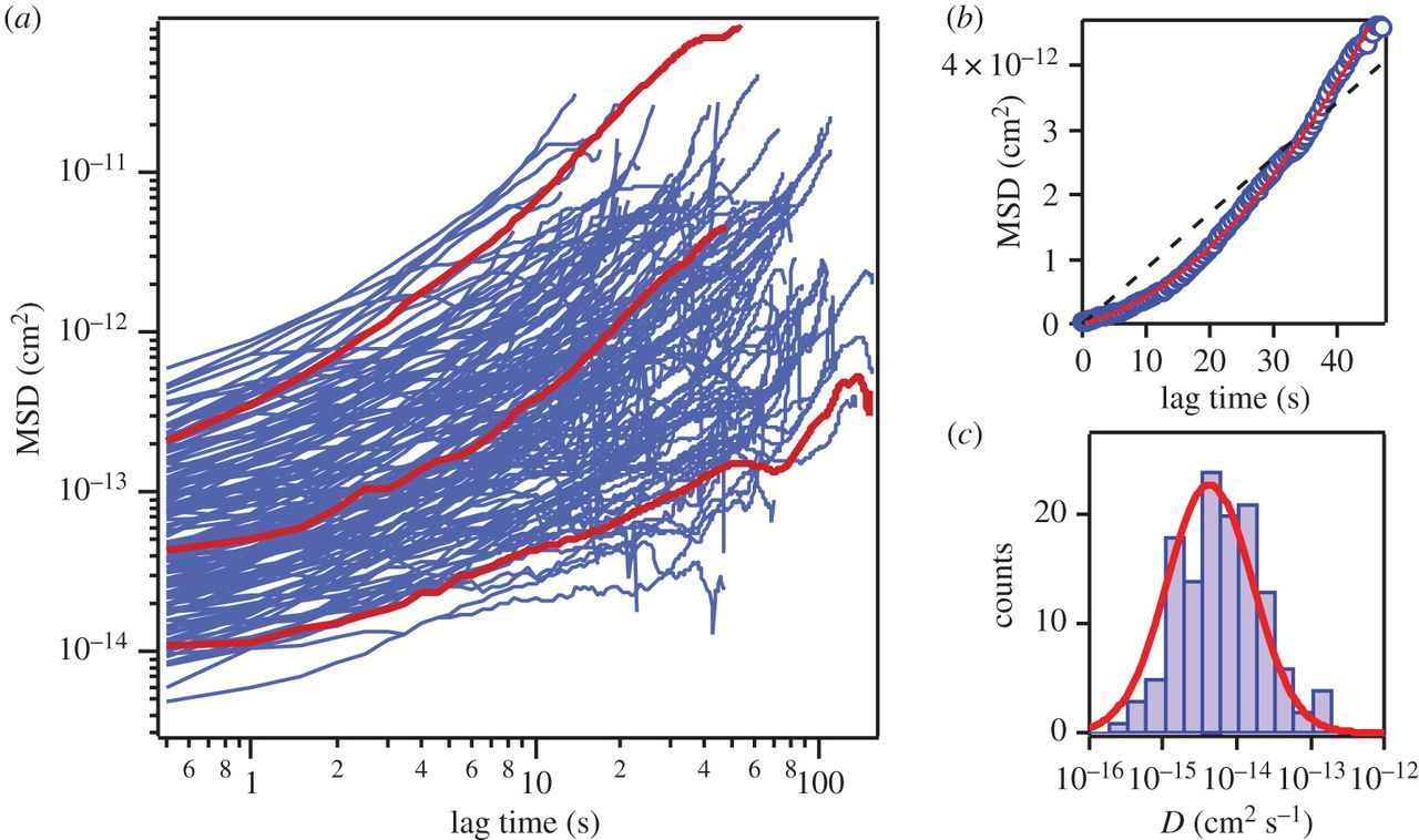 Real-time dynamics of carbon nanotube porins in supported
