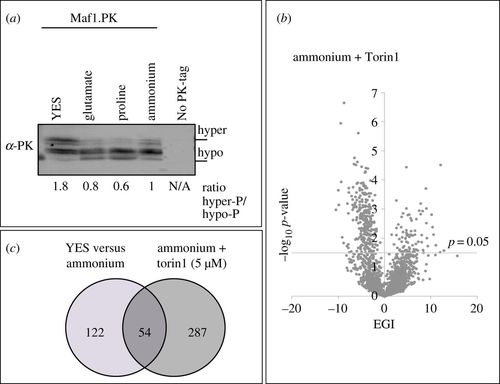 The contribution of non-essential Schizosaccharomyces pombe