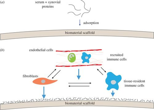 Augmenting endogenous repair of soft tissues with nanofibre