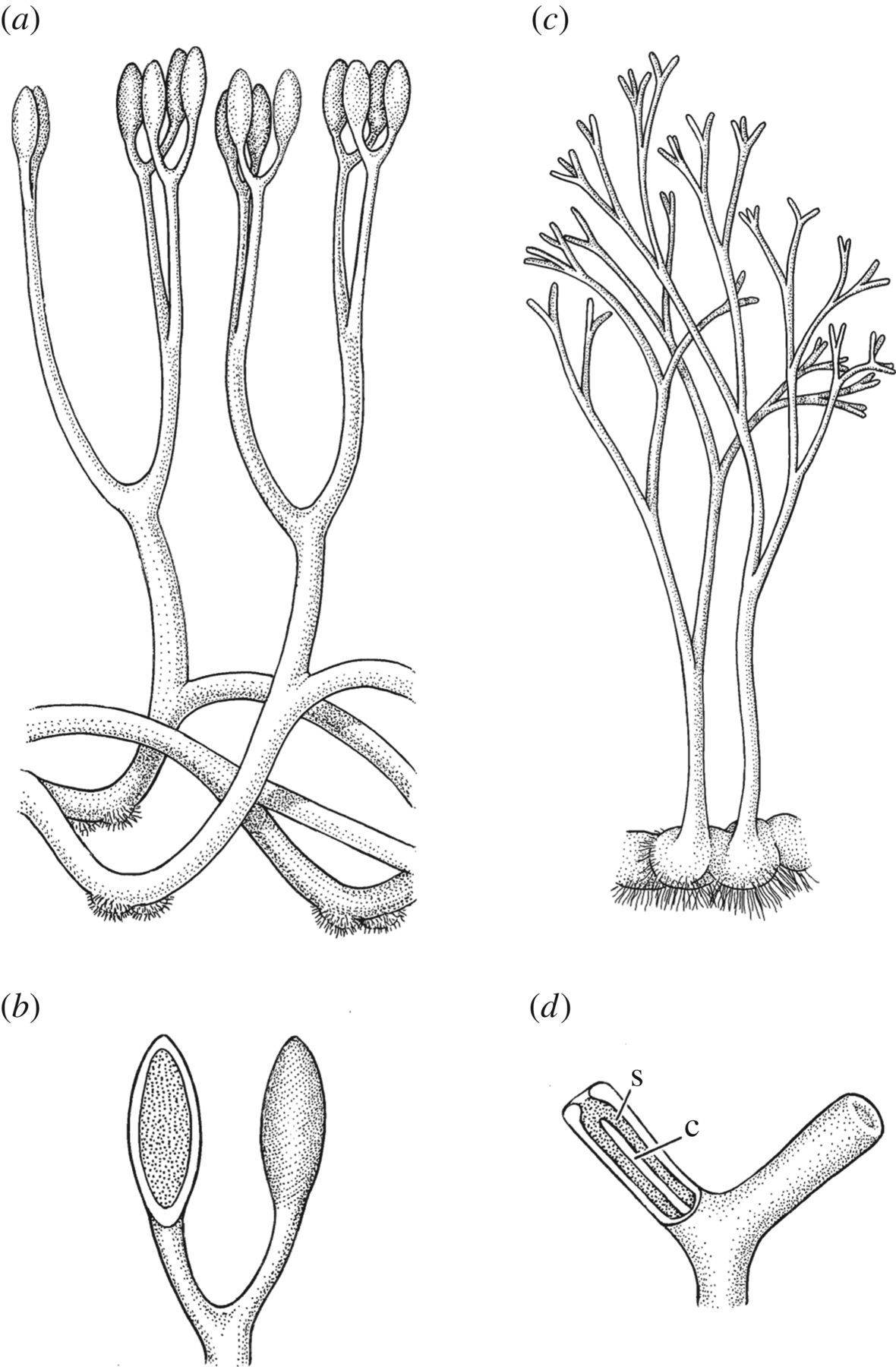 Changing expressions: a hypothesis for the origin of the vascular