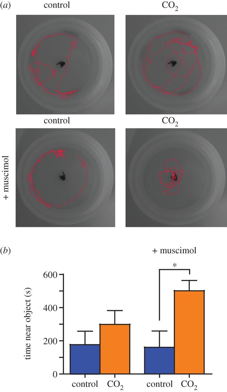 CO2-induced ocean acidification increases anxiety in