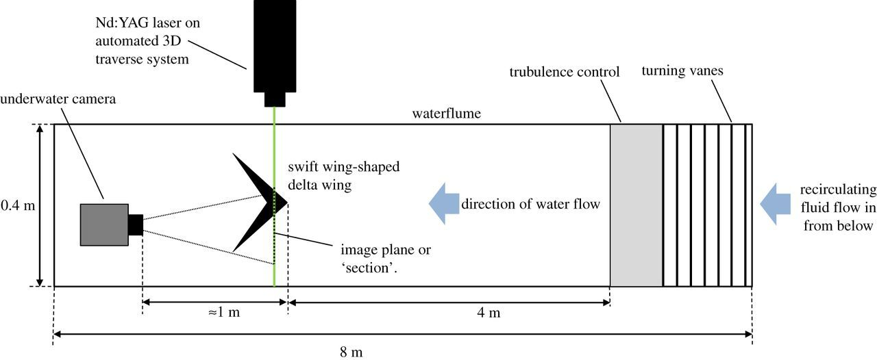 The leading-edge vortex of swift wing-shaped delta wings