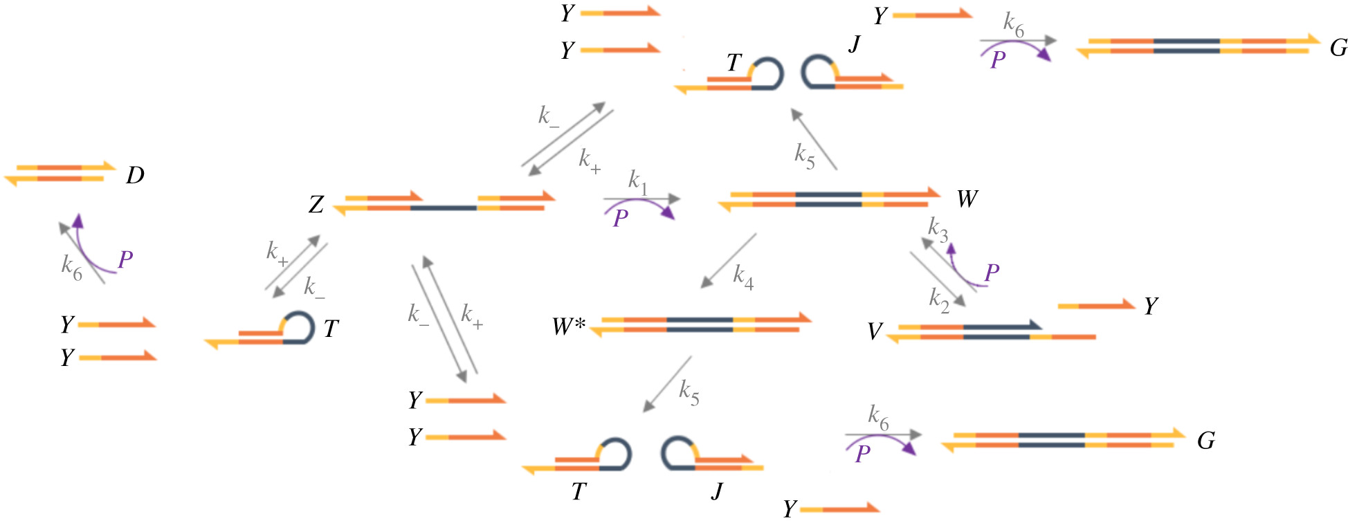 A mathematical model for a biphasic DNA amplification reaction