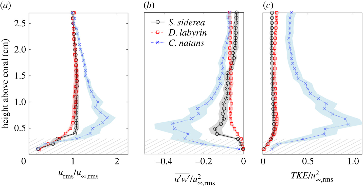 The role of turbulent hydrodynamics and surface morphology
