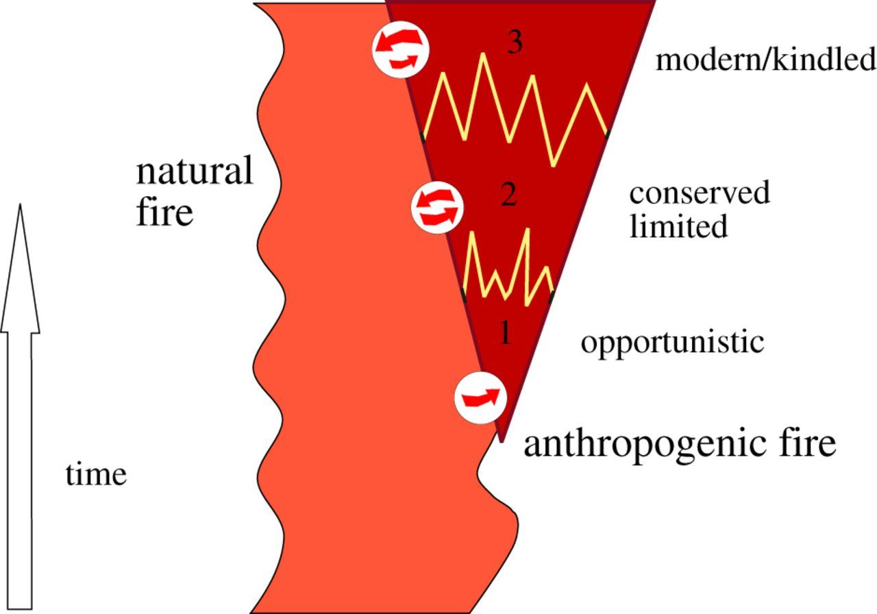 The discovery of fire by humans: a long and convoluted process