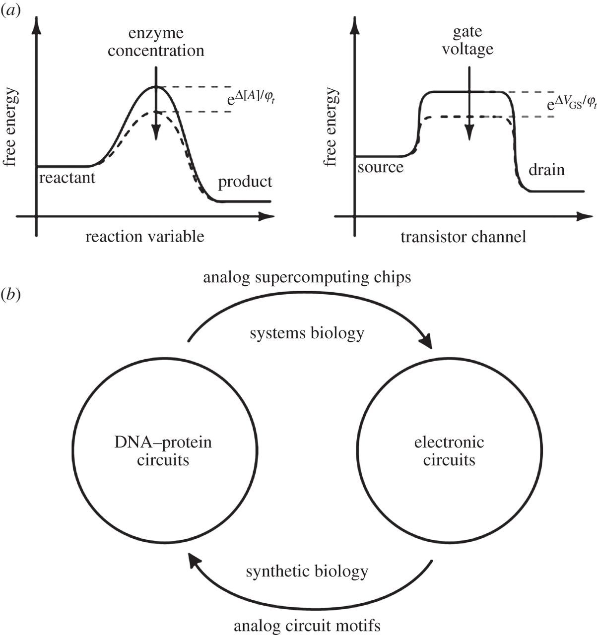 Analog Synthetic Biology Philosophical Transactions Of The Royal Diagram Circuit March 2013 Download Figure
