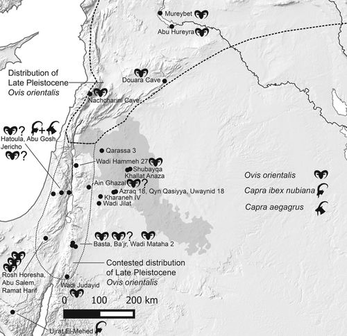 Expansion of the known distribution of Asiatic mouflon (Ovis