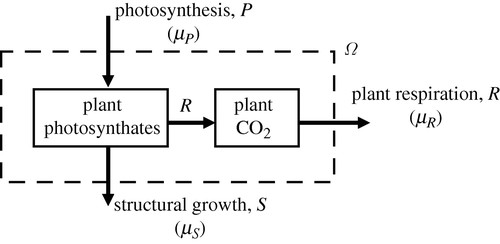 Maximum entropy production and plant optimization theories